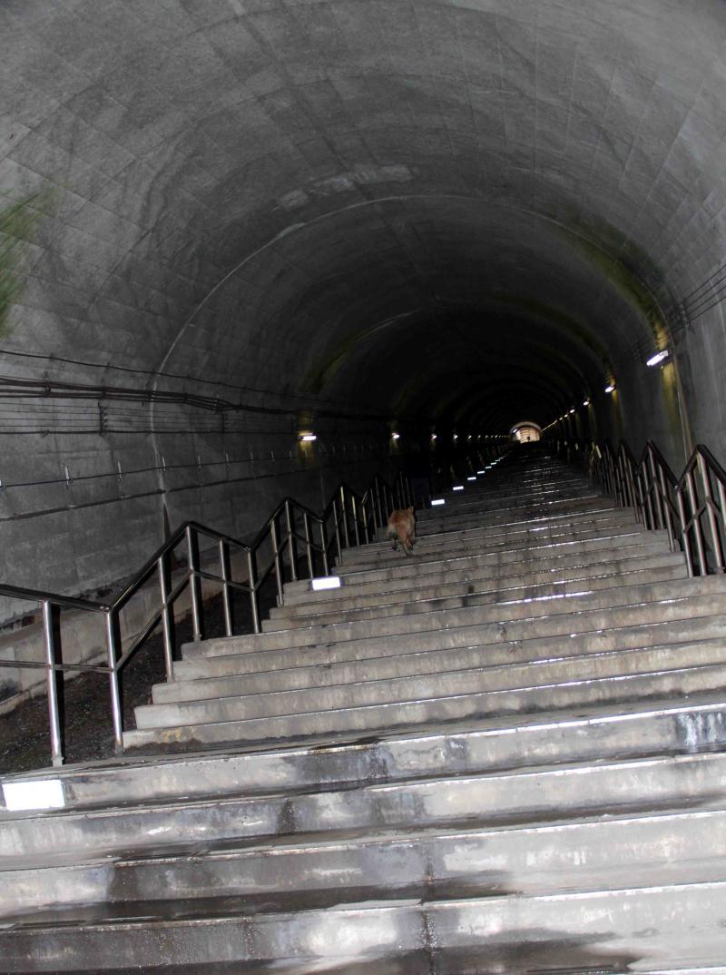 谷川雪中訓練(5) タイムトンネル
