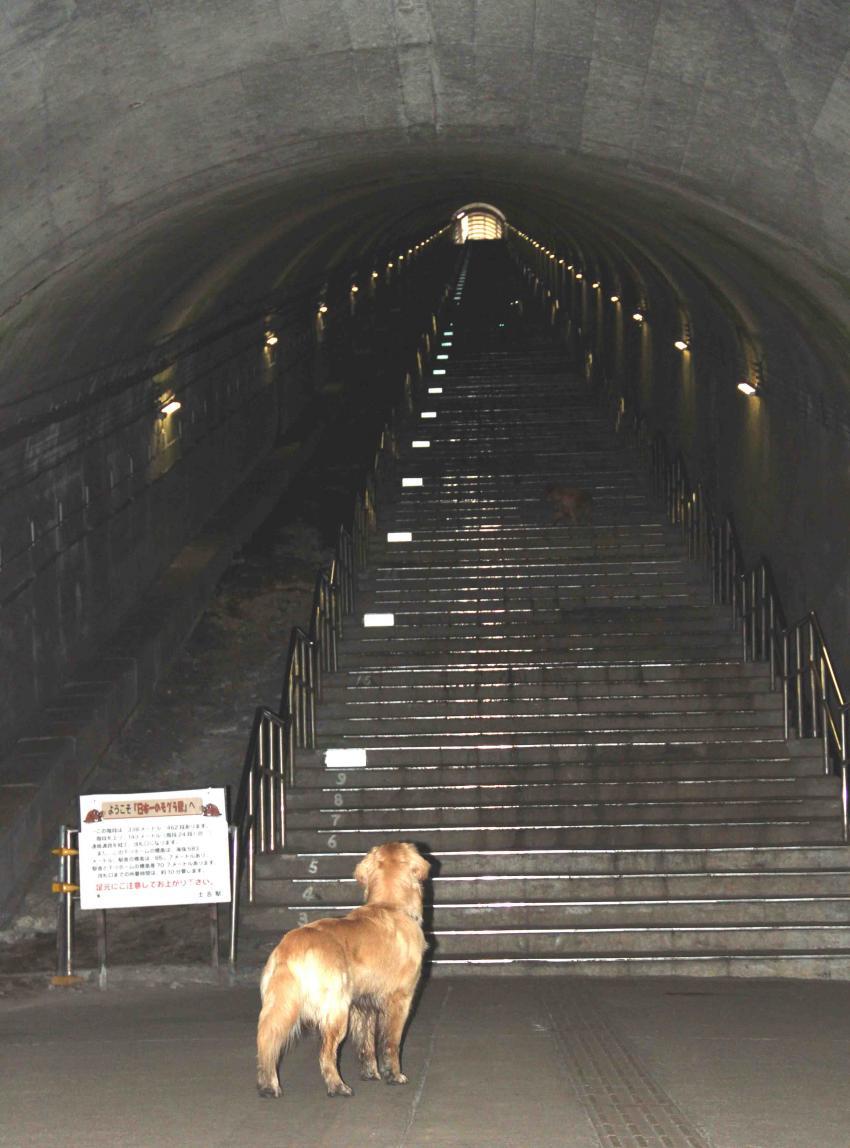 谷川雪中訓練(9) タイムトンネル