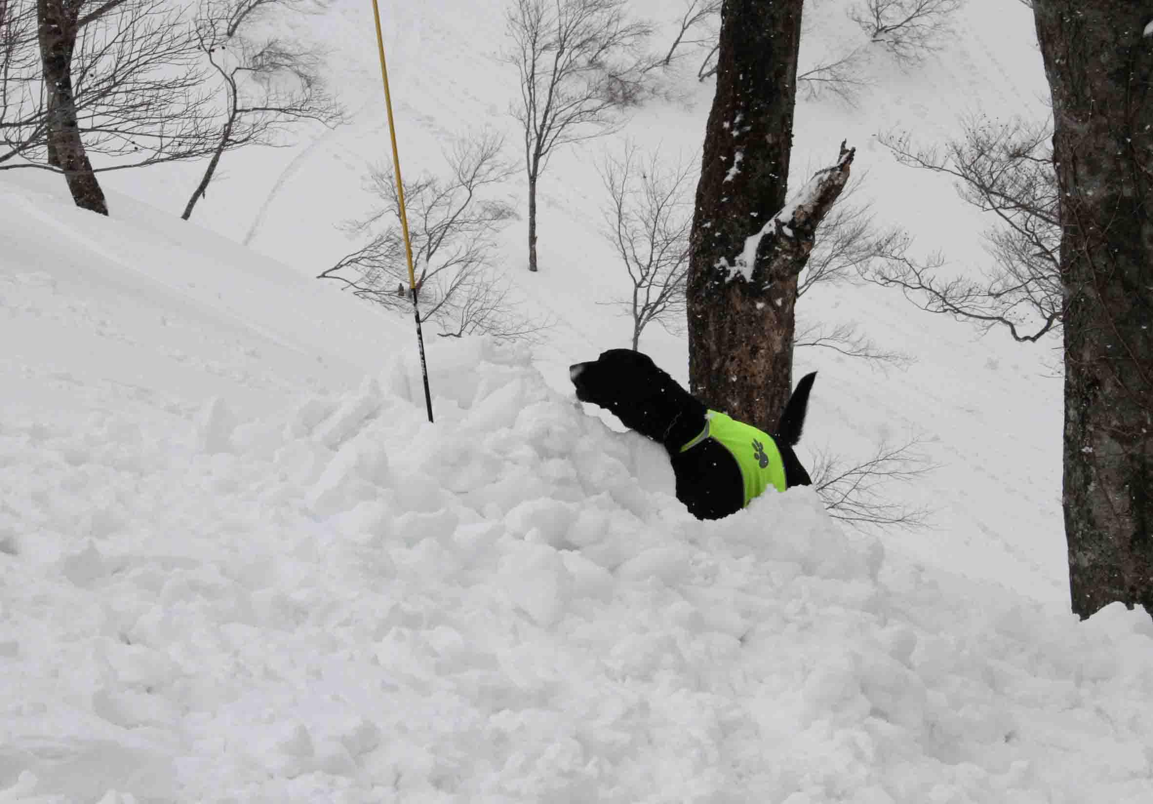 谷川雪中訓練 0401(18)