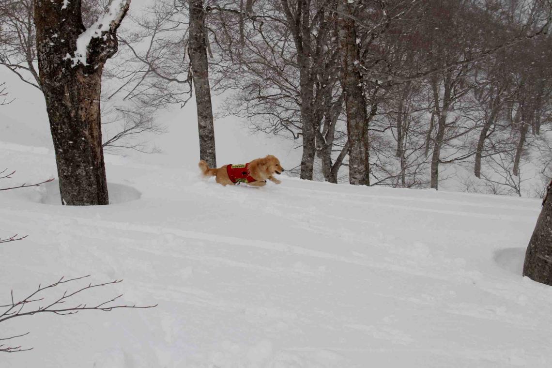 谷川雪中訓練 0401(29)