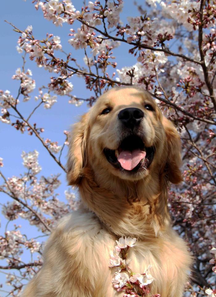 ヒットと桜 いいでしょ~