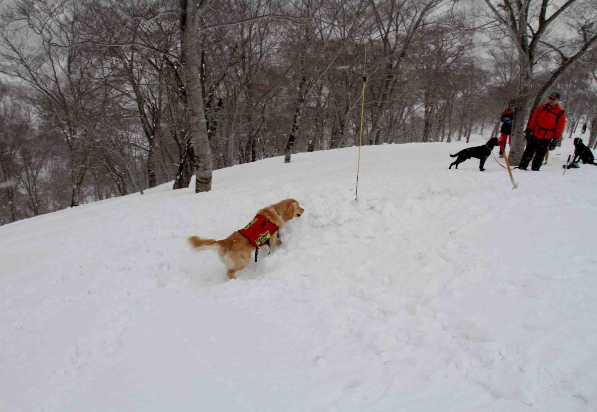 谷川雪中訓練 0401(34)
