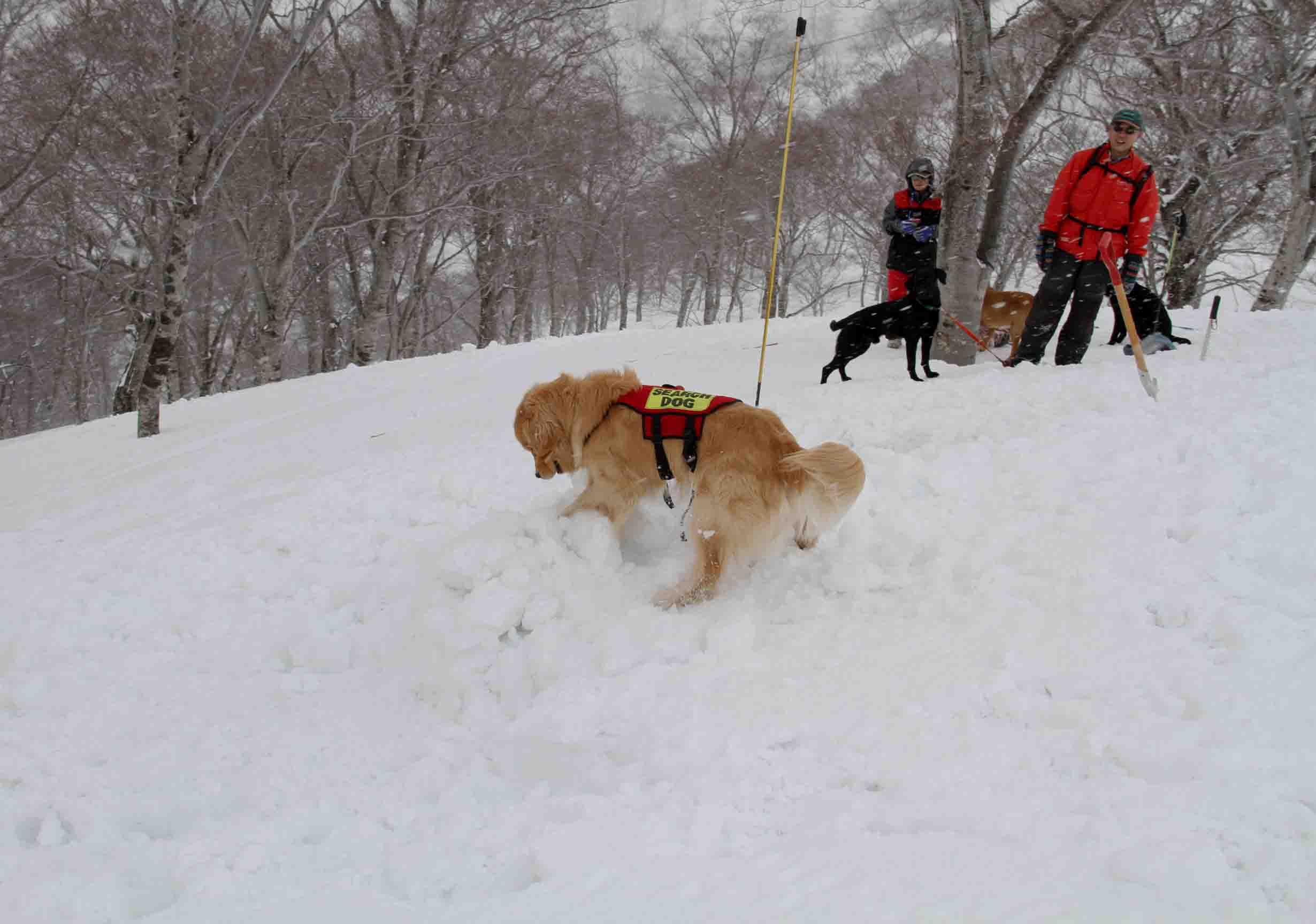 谷川雪中訓練 0401(35)