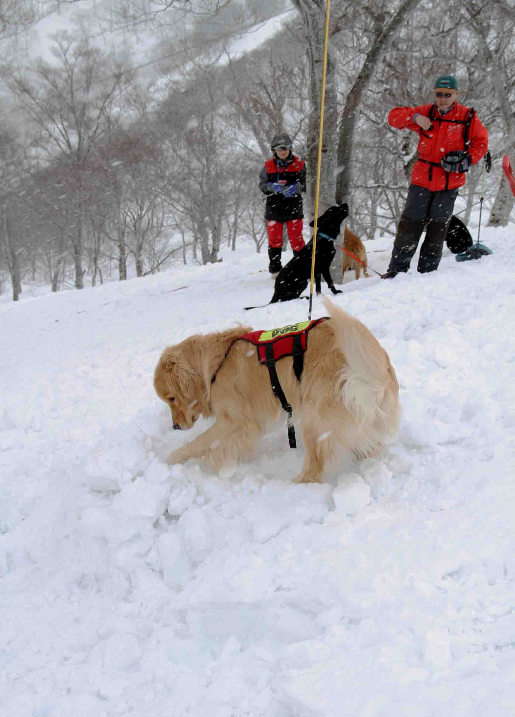 谷川雪中訓練 0401(37)