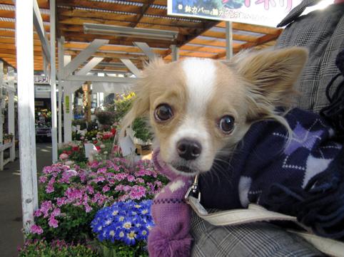 flowershop12021.jpg