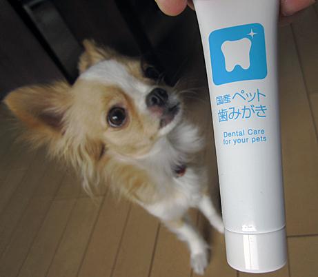 toothpaste1202.jpg