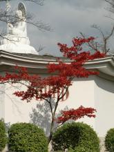 紅葉~4~