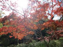 紅葉~3~