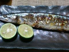 今秋の秋刀魚。