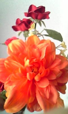 Image228_20130125094413.jpg