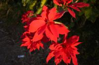 sentopo_convert_20110225095609.jpg