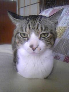 猫Take2。ぶれたから撮りなおした。