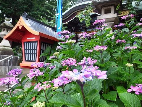 2013-06-12 川越八幡宮 029