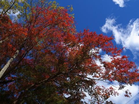 2013-11-13 奥多摩 002