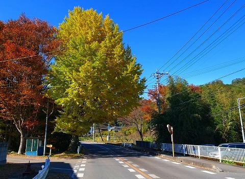 2013-11-20 鎌北湖 004
