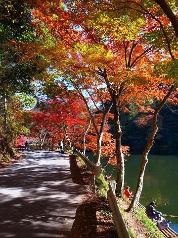 2013-11-20 鎌北湖 096