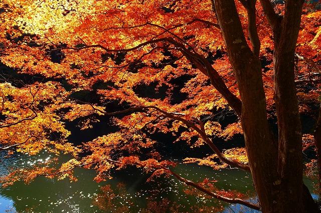 2013-11-20 鎌北湖 113