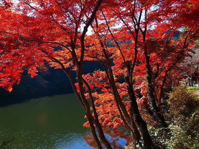 2013-11-20 鎌北湖 080
