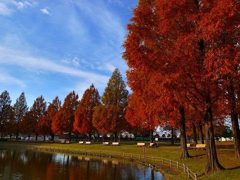 2013-11-27 川越水上応公園 022