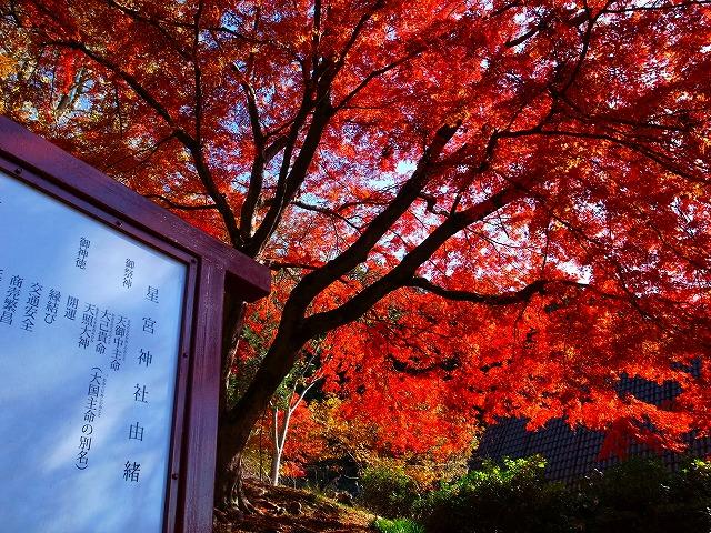 2013-11-27 星宮神社 002