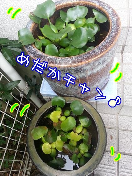 20131008_143355.jpg