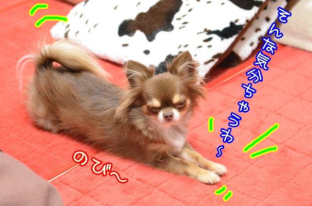 DSC_0022_20131109185749b64.jpg