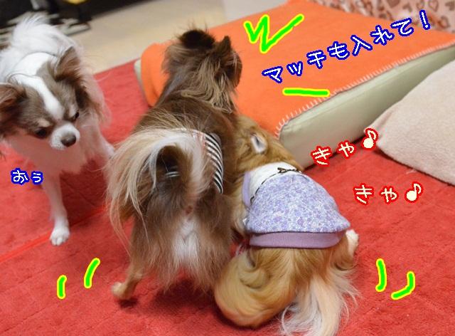 DSC_0062_2013110520172441f.jpg