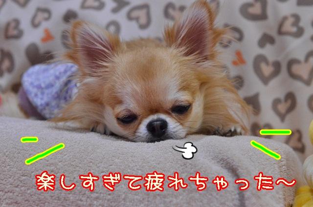 DSC_0098_2013110620455951f.jpg