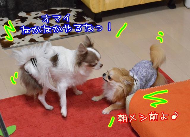 DSC_0100_20131105201729b22.jpg