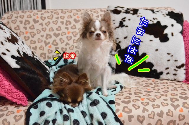 DSC_0118_20131107201946d6c.jpg