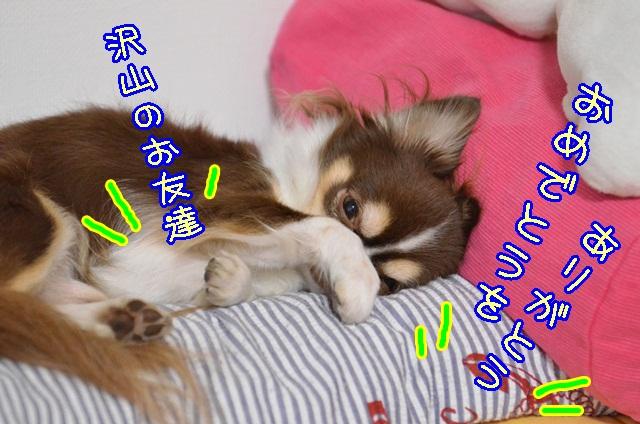 DSC_0210_201311112033350dc.jpg