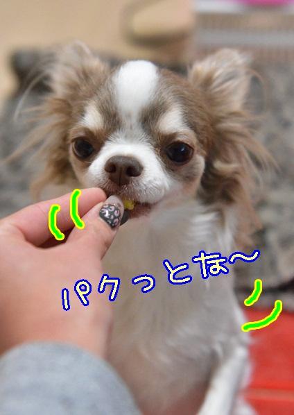 DSC_0624_201311251701304f2.jpg