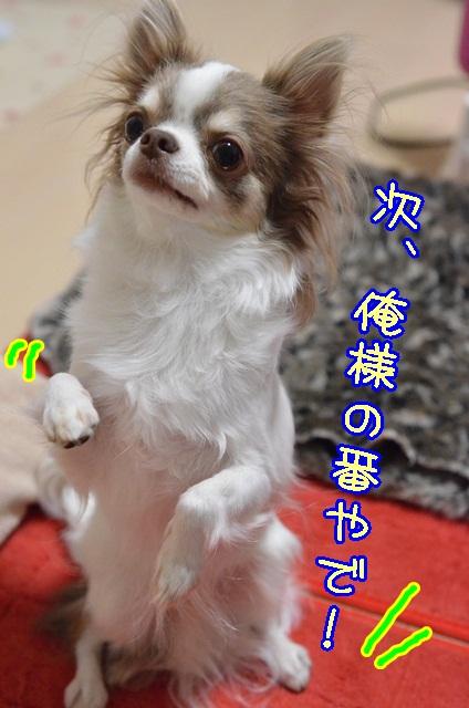DSC_0635_20131125170201c47.jpg