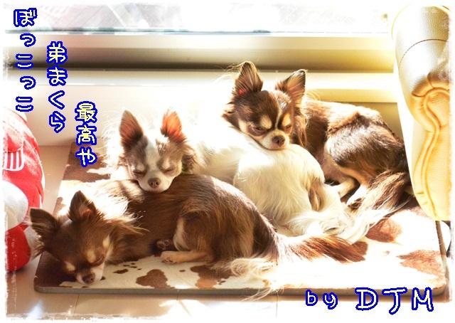 DSC_0739.jpg