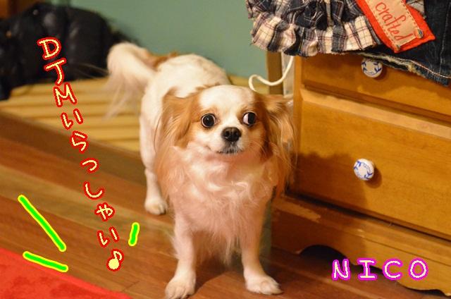 DSC_0796_20131209192519234.jpg