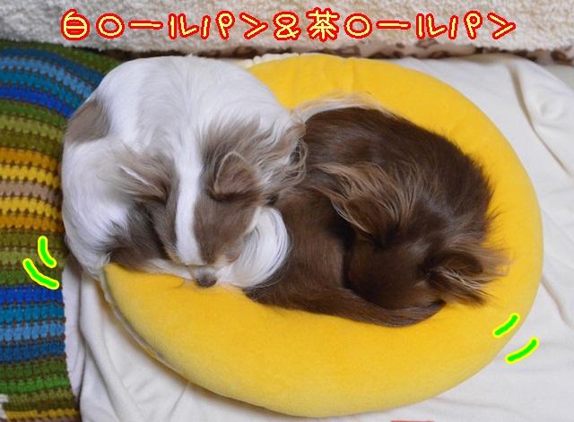 DSC_0953.jpg