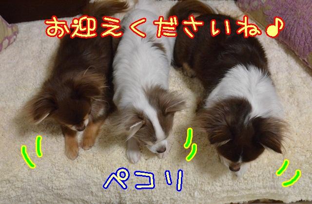 DSC_1107_2013122800020536b.jpg
