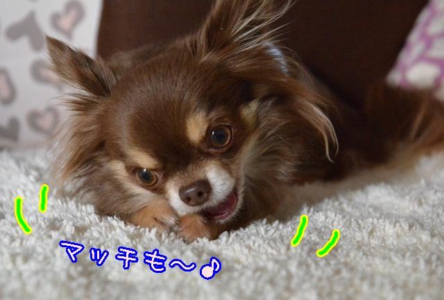 DSC_1124_201312291952403ef.jpg