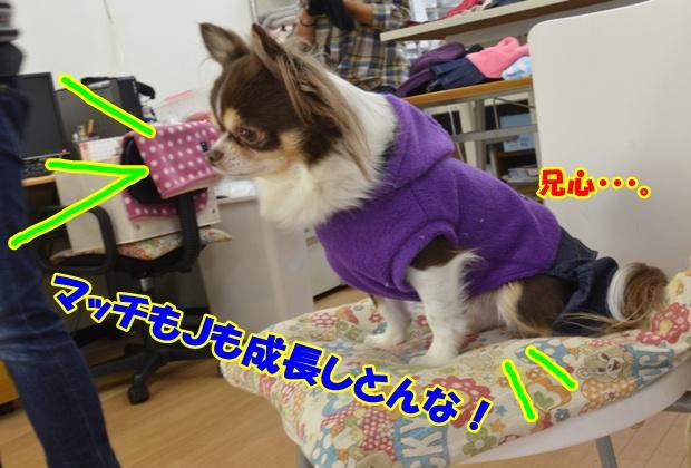 DSC_3611_20130208210224.jpg