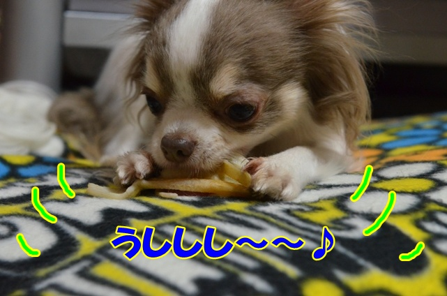 DSC_4483_20130204212056.jpg