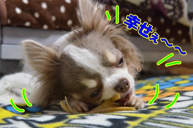 DSC_4487.jpg