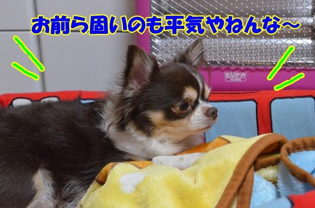 DSC_4497_20130205213008.jpg