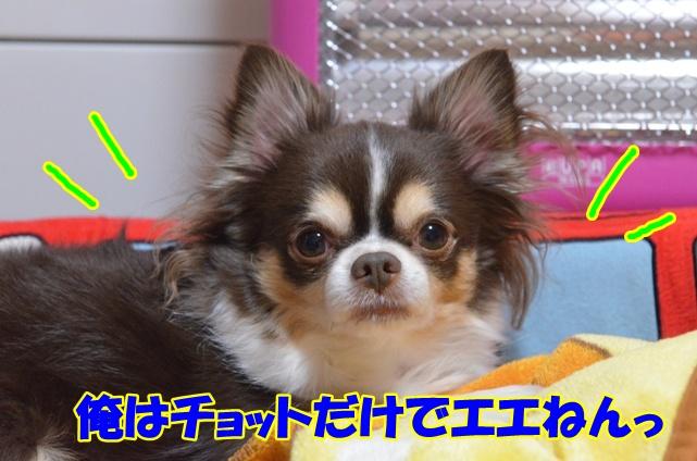 DSC_4498_20130205213009.jpg