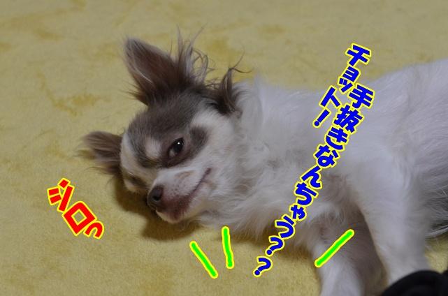 DSC_4505_20130209205638.jpg