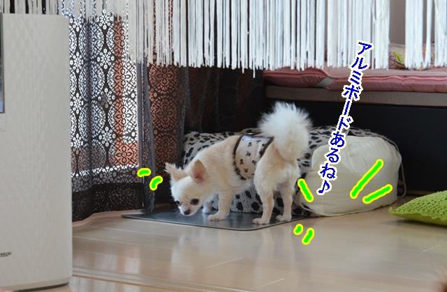 DSC_7868_20130727195413.jpg