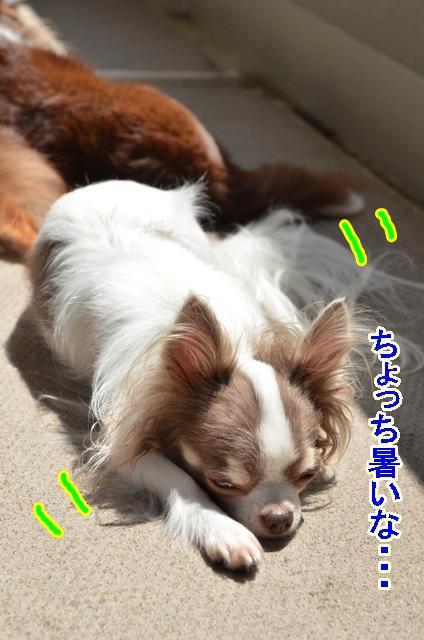 DSC_7948_20130802203431b3b.jpg