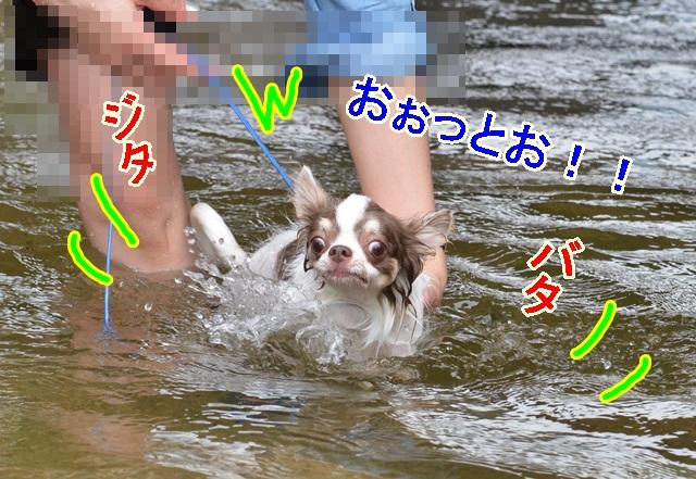 DSC_8024_20130808175421ba0.jpg