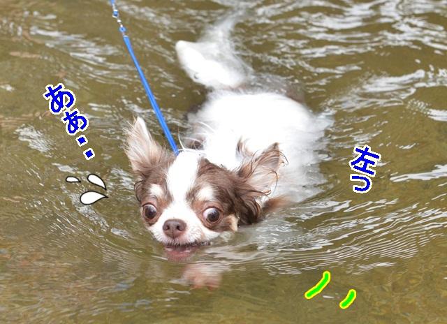 DSC_8029.jpg