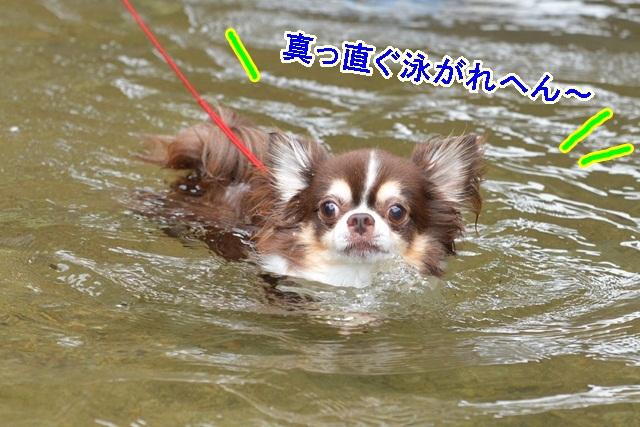 DSC_8086.jpg
