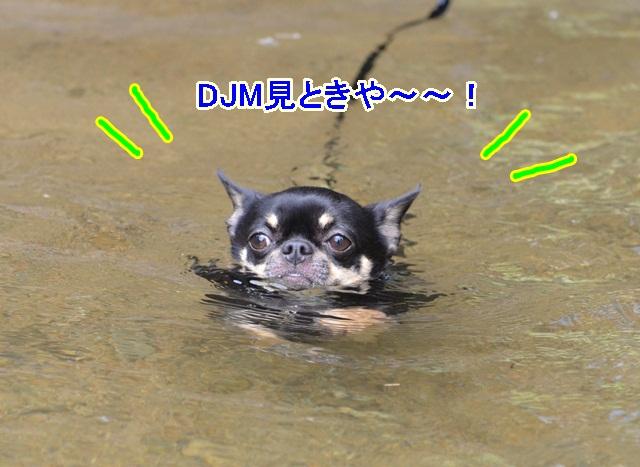 DSC_8135.jpg
